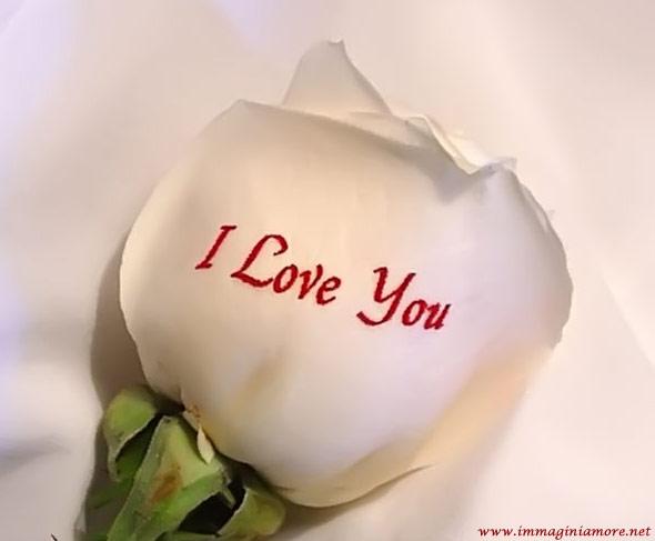 Immagine Rosa I Love You
